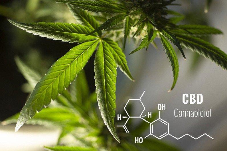 CBD - kannabidiol