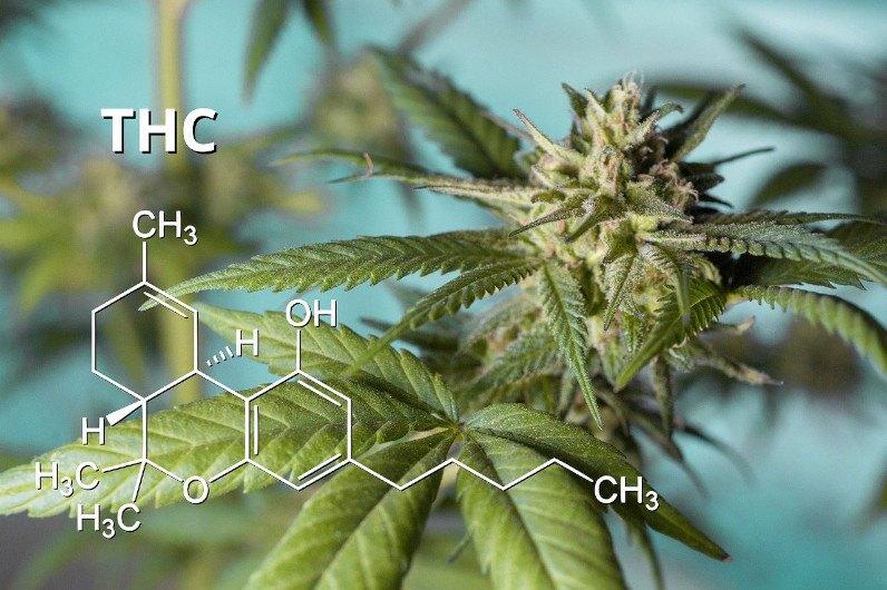 THC - tetrahydrokannabinol