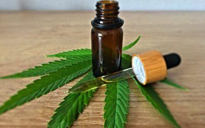 Olej konopny CBD / THC w leczeniu raka i nowotworów