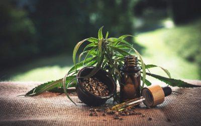 Olej konopny – właściwości i zastosowanie lecznicze
