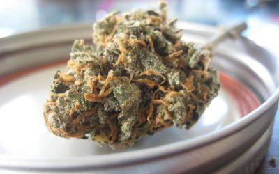 Dekarboksylacja konopi CBD i marihuany: 6 metod